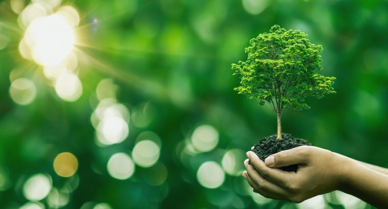 Tree planting on volunteer family's hands for eco friendly and c